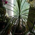 Отдается в дар Домашнее растение