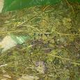 Отдается в дар Сушеные травы-специи: базилик, эстрагон (тархун), душица (орегано).
