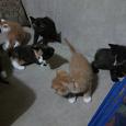 Отдается в дар Отдаются котята в добрые руки, из экопоселения ;)