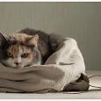 Отдается в дар Вещевой кот в мешке. Размер 44-46.