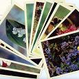 Отдается в дар Набор открыток Полевые цветы 1969г
