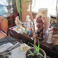 Отдается в дар Растения алоэ столетник