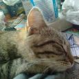 Отдается в дар котик в добрые руки