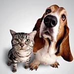 Дары для животных