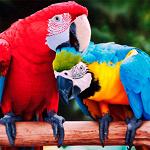 Попугаи-попугайчики