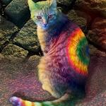 коты, кошки котята
