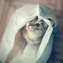 Отдается в дар Кіт в мішку кіндерсюрпризний =)
