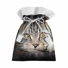 Отдается в дар Кот в мешке.