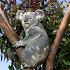 Small_koala
