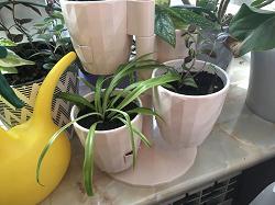 Отдается в дар «Комнатные растения.»