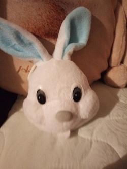 Отдается в дар «Голова зайца. Возможно игольница.»