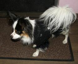 Отдается в дар «Одежда для маленькой собачки»