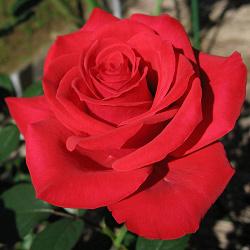 Отдается в дар «Сеанс Рэйки для тех, кто ГОТОВ к Переменам!»