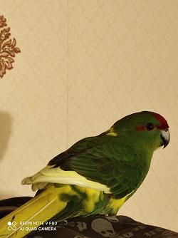 Отдается в дар «Корм для крупных попугаев»