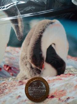 Отдается в дар «Монеты биметалл 10 рублей»