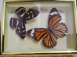 Отдается в дар «Бабочки в рамке»