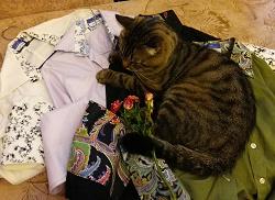 Отдается в дар «Блузки под запонки»
