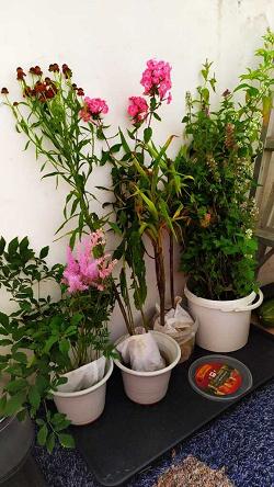 Отдается в дар «Садовые цветы»