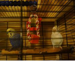 Отдается в дар «Подвеска для попугая»