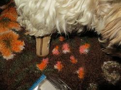 Отдается в дар «ботиночки для мелкого питомца (обувь для собак)»
