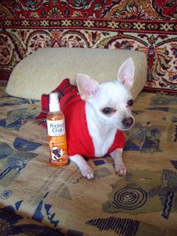 Отдается в дар «ароматизированный спрей для собак»