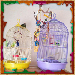 Отдается в дар «Отдаем попугая в хорошие руки:)»