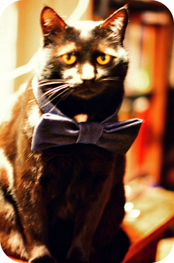 Отдается в дар «Шампунь для котов.»