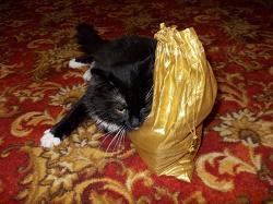 Отдается в дар «Кот в мешке г. Москва»