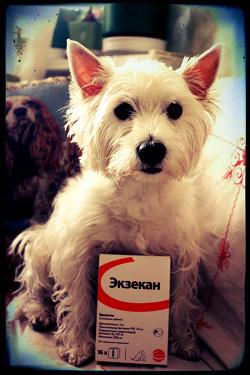 Отдается в дар «Экзекан (для собак)»