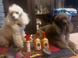 Отдается в дар «Увлажняющий спрей с антистатическим эффектом для ухода за шерстью собак»