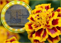 Отдается в дар «Банкнота Египта»