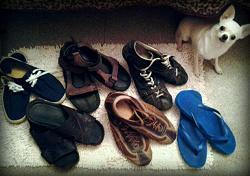 Отдается в дар «Грядка мужской обуви»