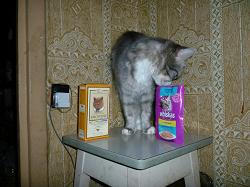 Отдается в дар «витамины для котэ»