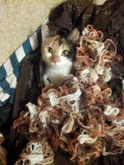 Отдается в дар «шарфик»
