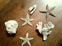 Отдается в дар «Две засушенные морские звезды»