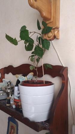 Отдается в дар «комнатные растения»