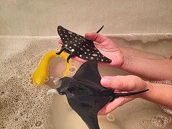 Отдается в дар «Игрушки подводный мир, пресмыкающиеся»