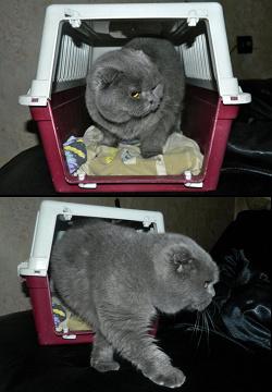 Отдается в дар «Переноска для кошек или маленьких собачек»