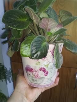 Отдается в дар «Горшки для рассады или цветов»