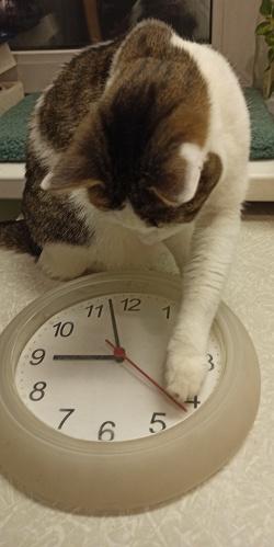 Отдается в дар «Часы настенные»