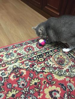 Отдается в дар «Игрушка для кошки Новая»