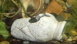 Отдается в дар «Для украшения аквариума»