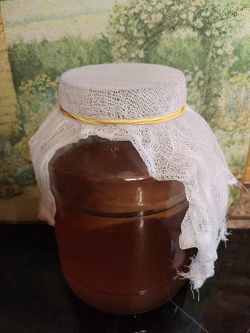 Отдается в дар «Чайный гриб»