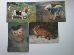 Отдается в дар «Часть открыток из набора «Планета»»