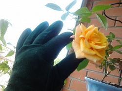 Отдается в дар «Перчатки»