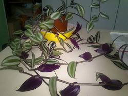 Отдается в дар «Комнатные растения!»