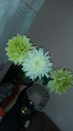 Отдается в дар «Искусственные цветы хризантемы»