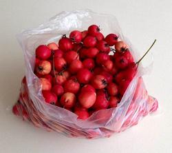 Отдается в дар «плоды боярышника»