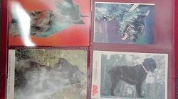 Отдается в дар «Календарики собачки 12»