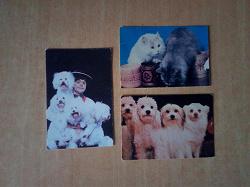 Отдается в дар «карманные календарики кошки собаки цирк»